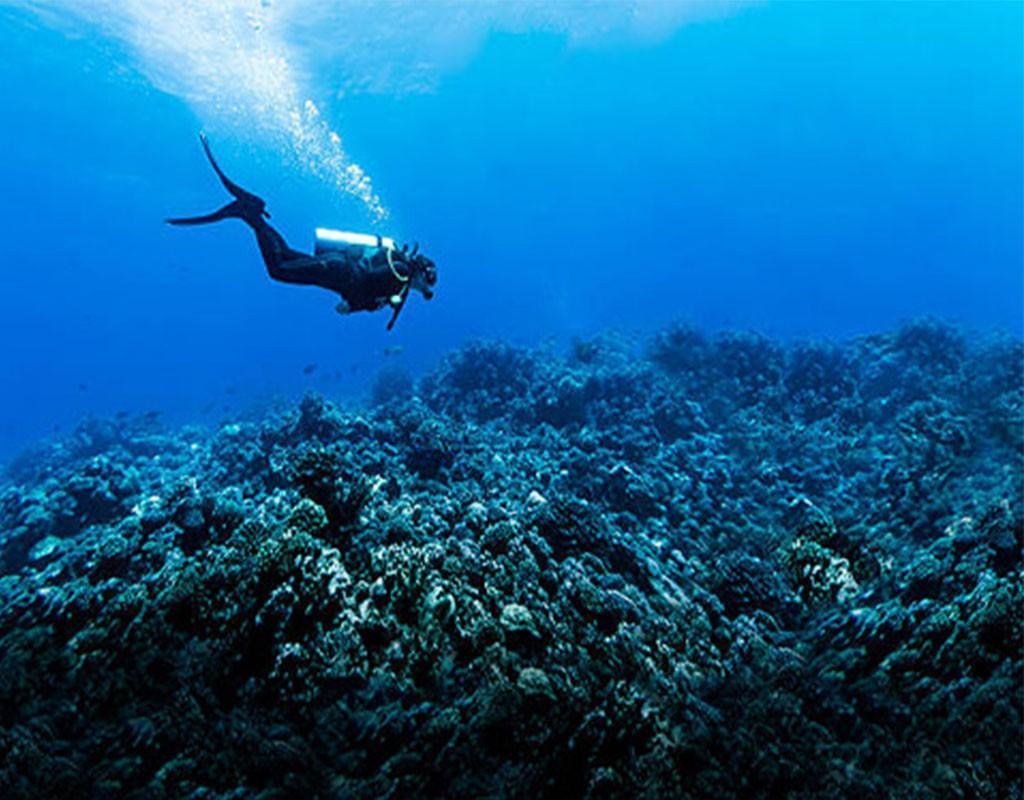 Scuba Diving Adriatic